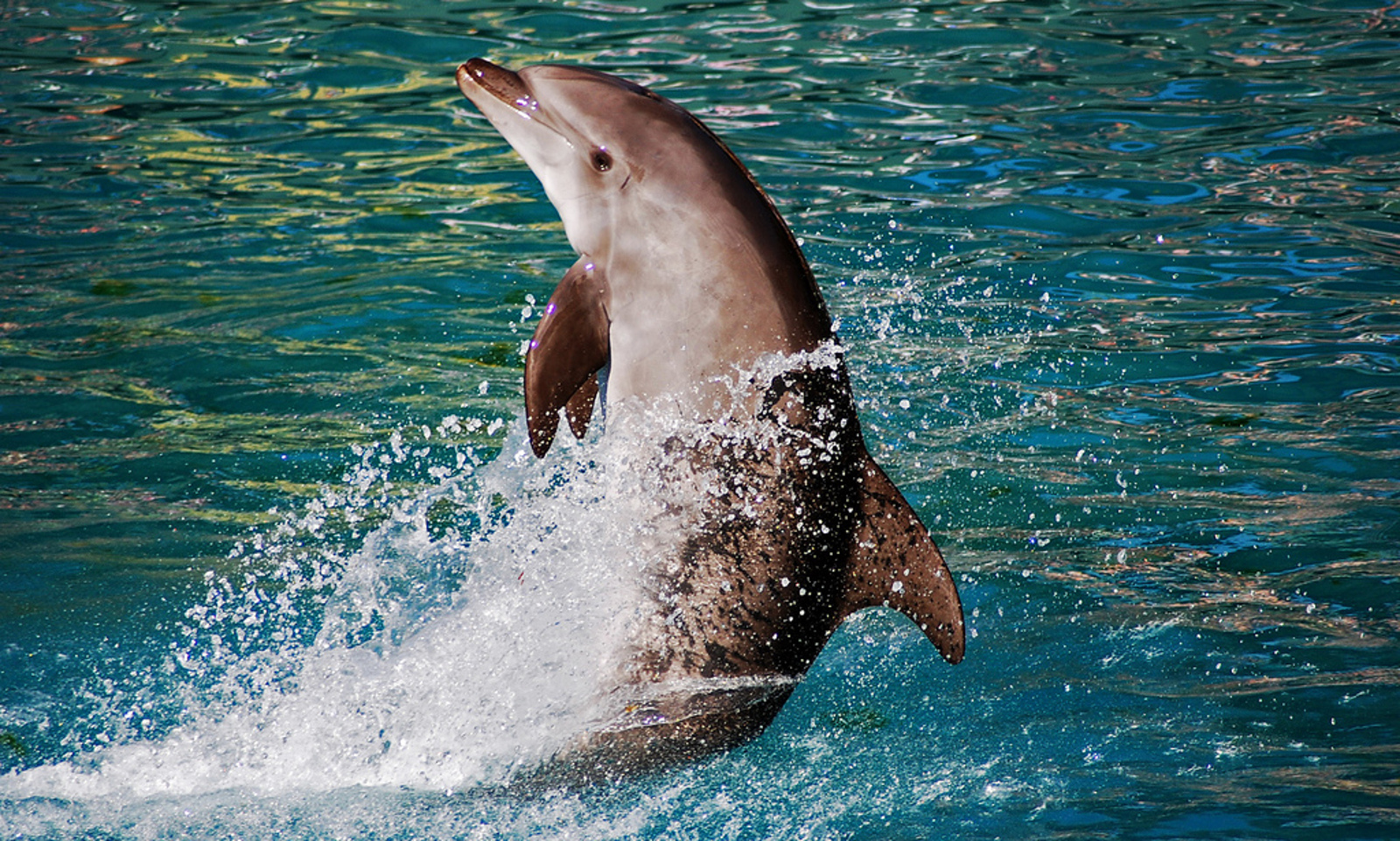 Clashing Opinions on the End of the Cruel Taiji Dolphin Hunts: Why We Can't Give Up NowClashing Opinions on the End of the Cruel Taiji Dolphin Hunts: Why We Can't Give Up Now