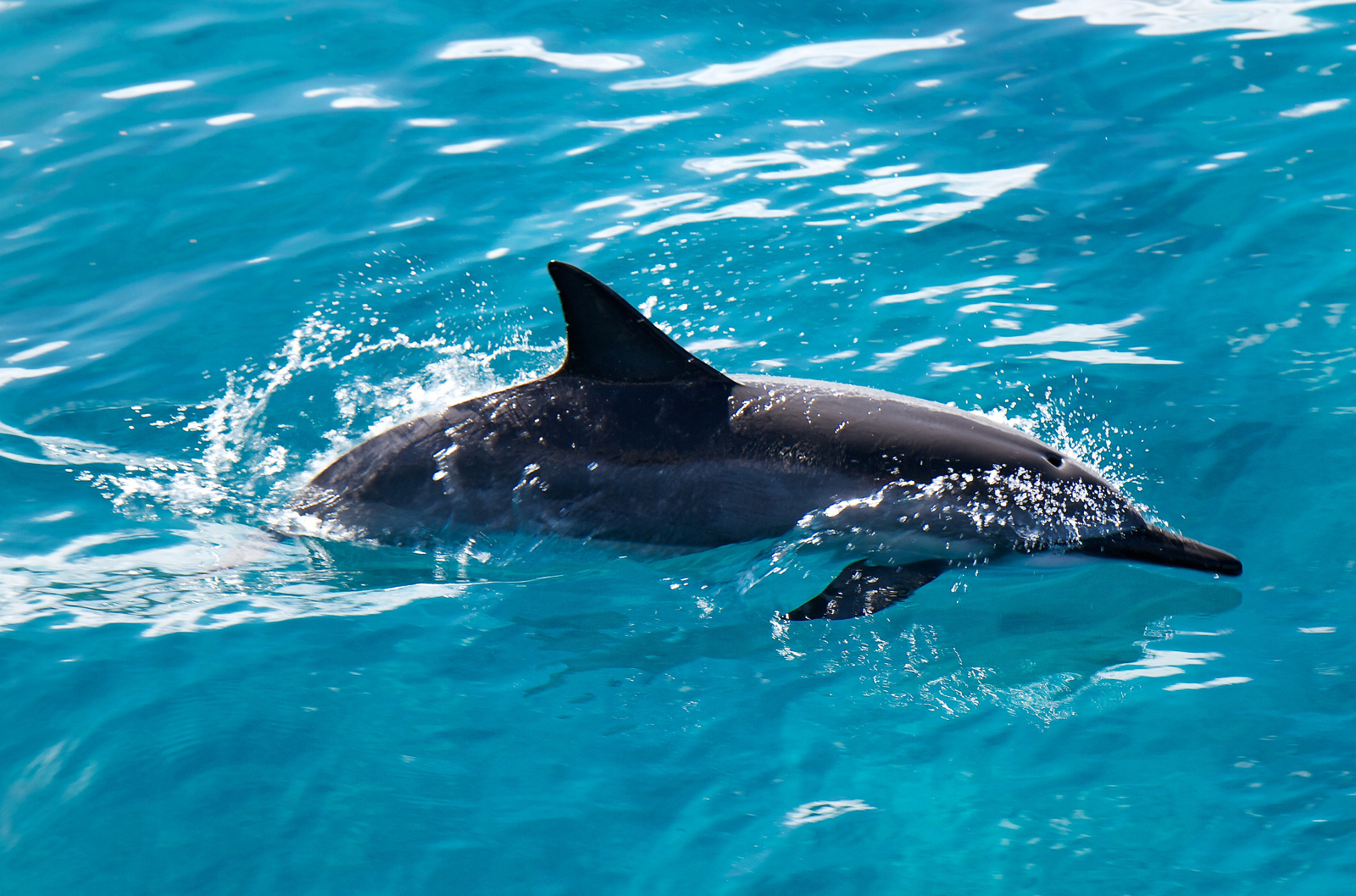 How Creating Marine Sanctuaries is Helping Endangered Sharks, Whales and Dolphins in the Wild