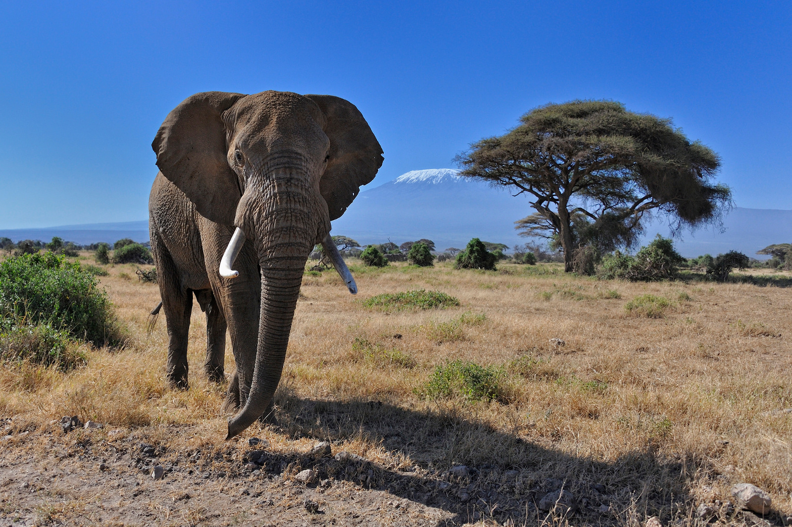Corruption in the Congolese Government is Driving the Extinction of Elephants
