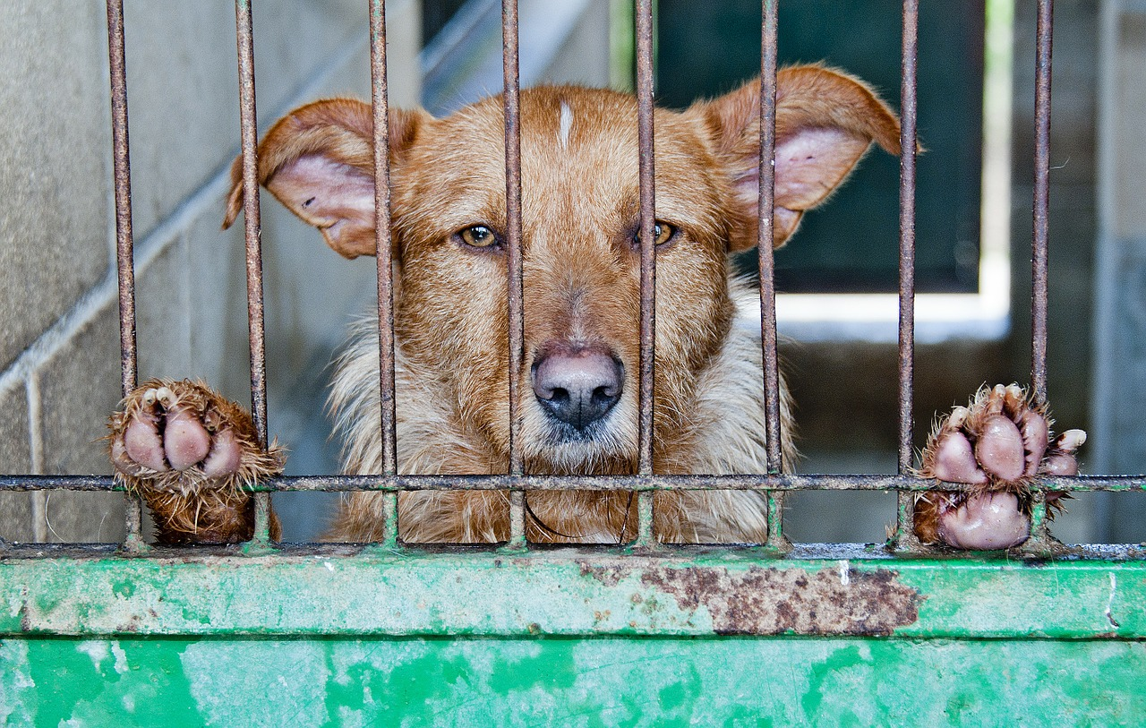 Human Health Concerns Associated with the Dog Meat Trade
