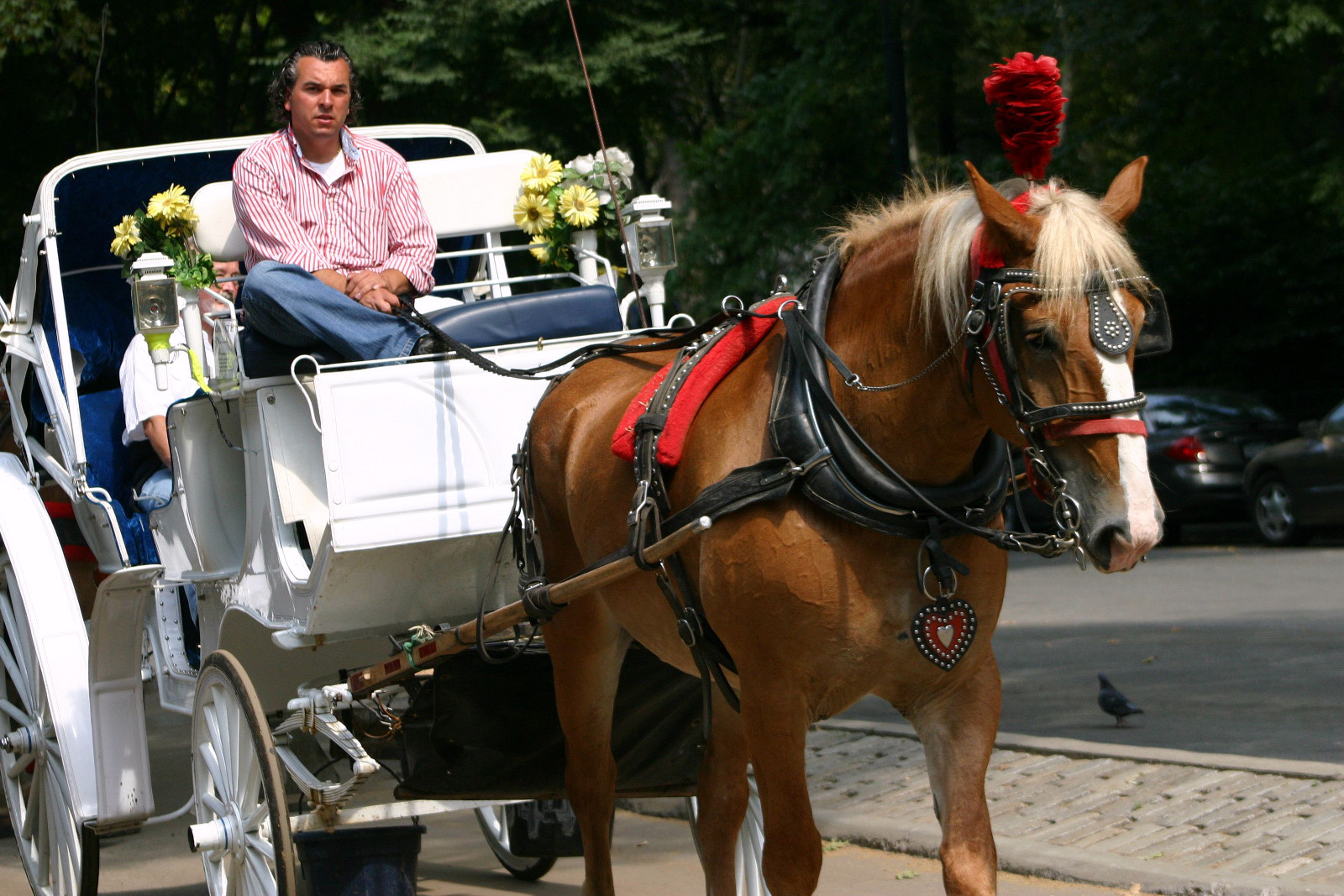 Are Horse-Drawn Carriages Rides Safe for the Public?