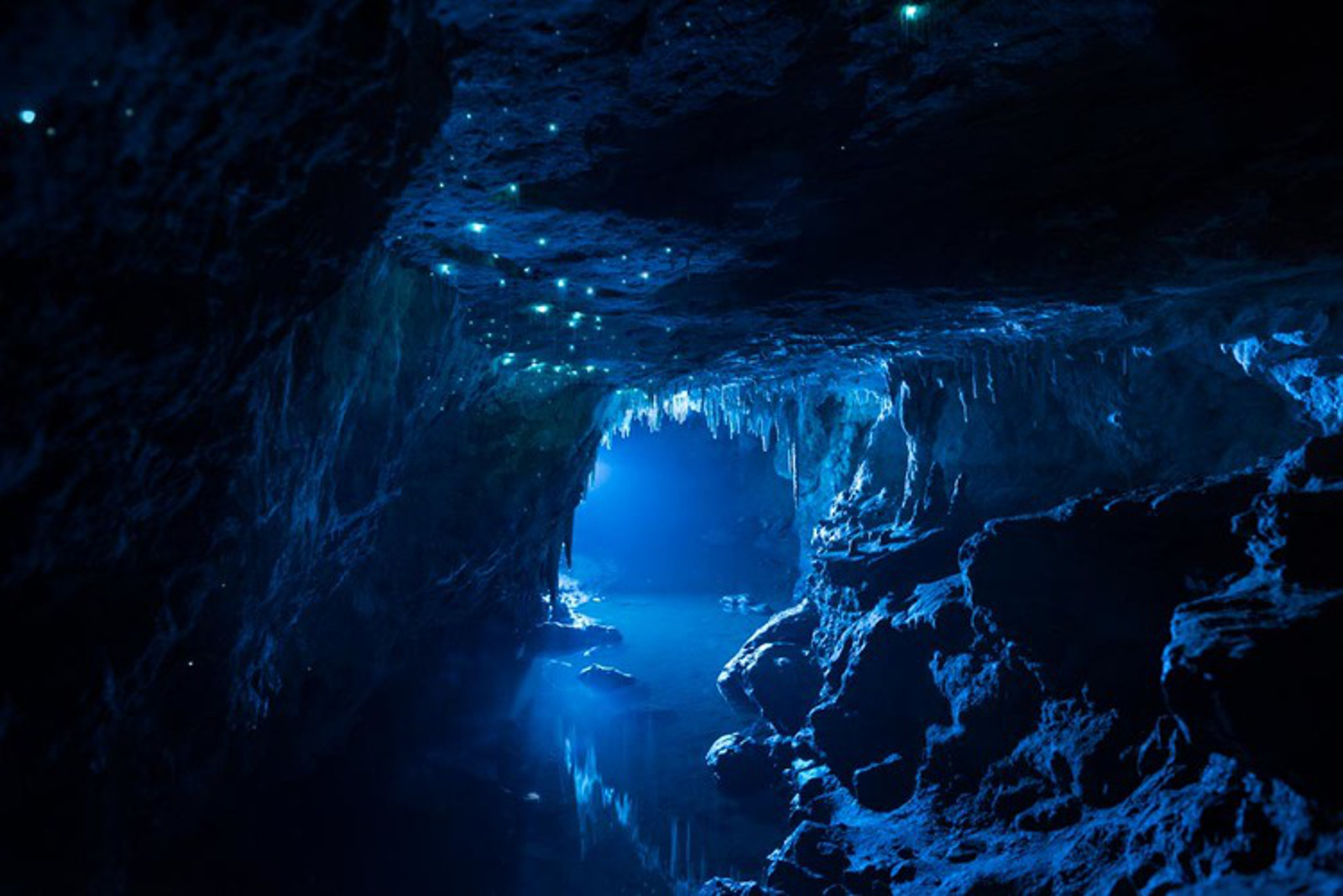 Breathtaking Photographs of Bioluminescent Caves Will Inspire You to Stand Up for Nature