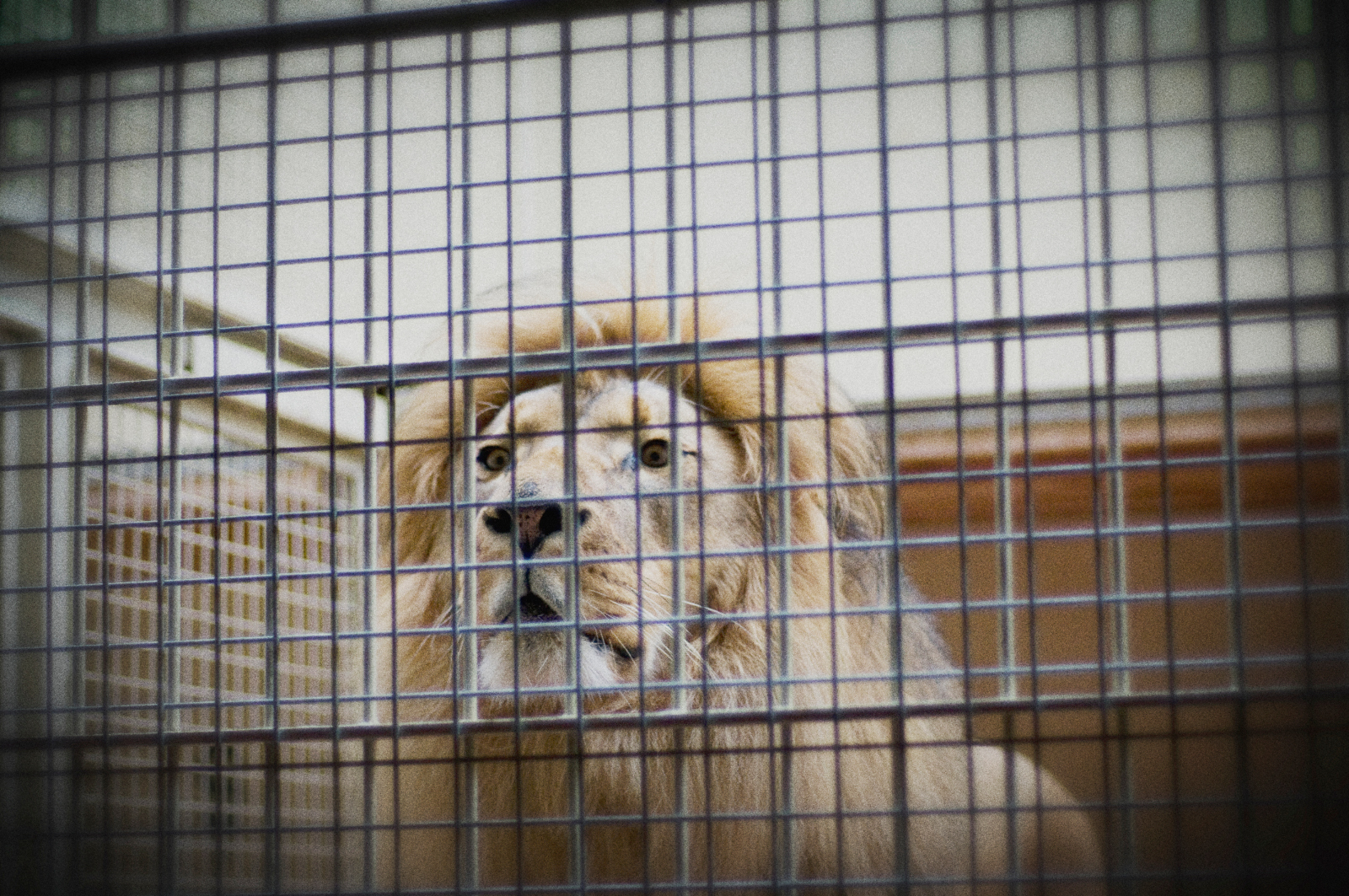 Wild Animals Are Not Disposable Inventory in a Warehouse. Why Trophy Hunting Can't be Justified