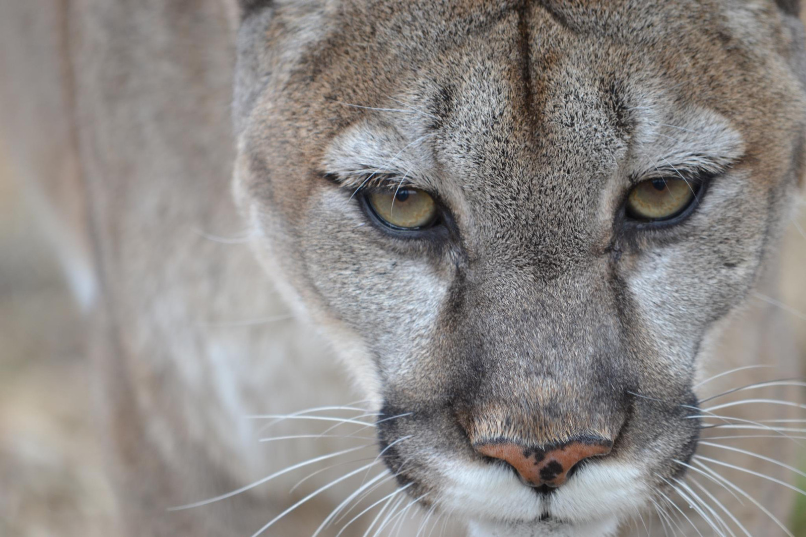 How Facebook Changed the Lives of Rescued Big Cats Forever