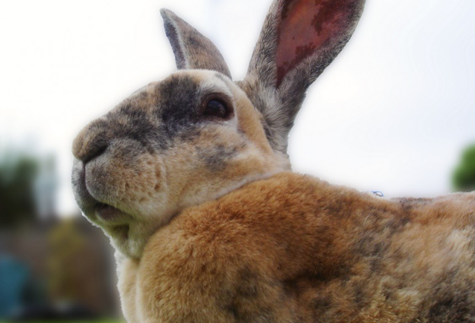 The Problem With Rabbit Meat...Besides the Obvious