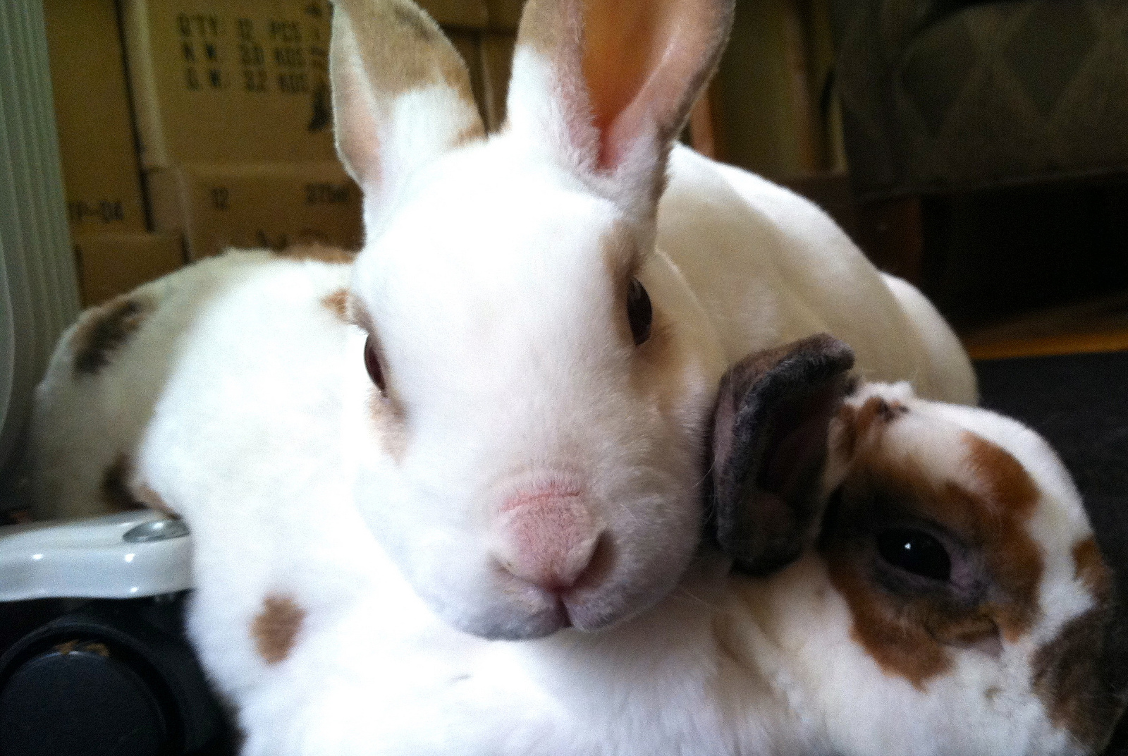 Woohoo! Act That Could Ban Cosmetic Testing on Animals in the U.S. One Step Closer to Reality!