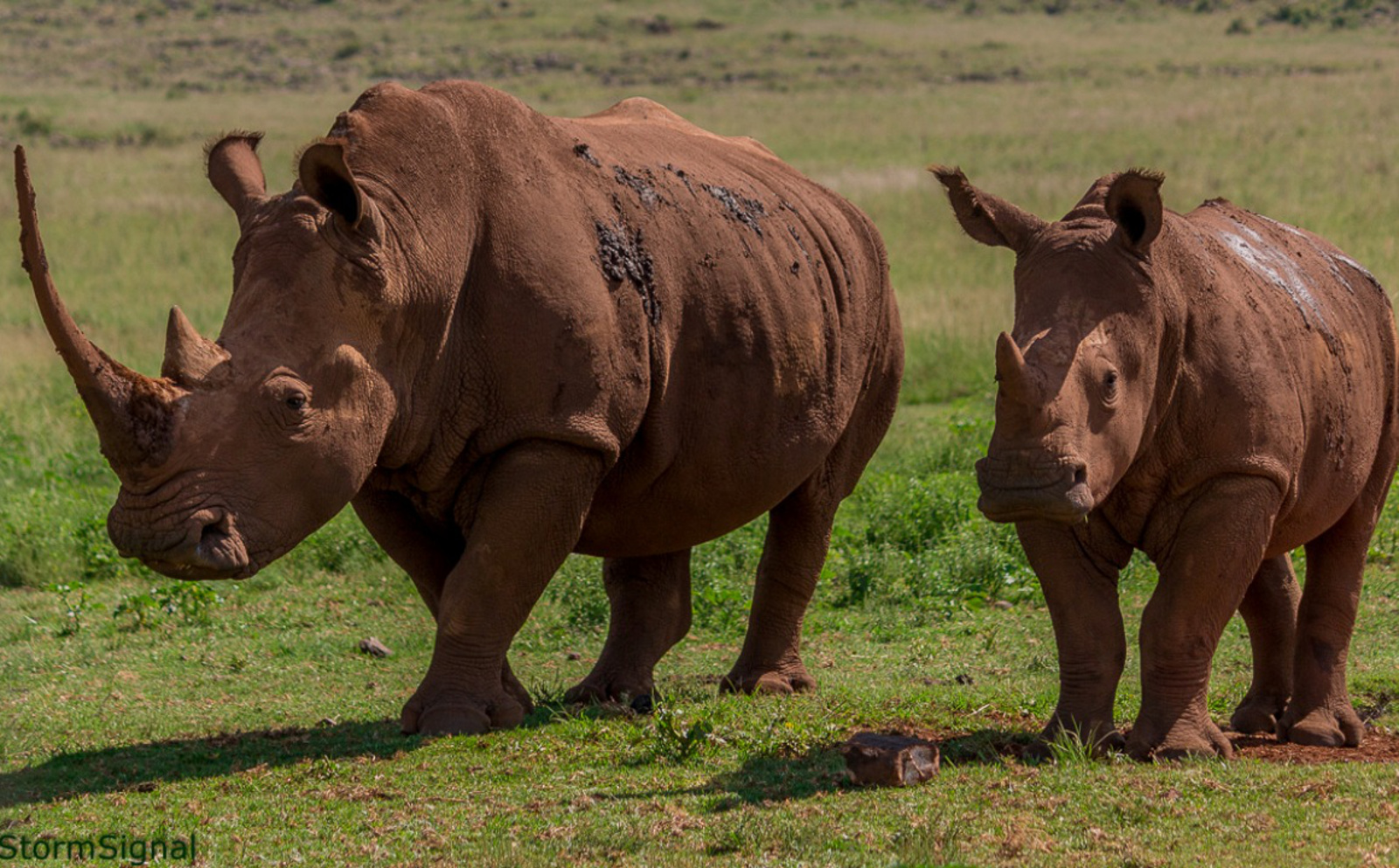 Should We Celebrate Rhino Horn and Ivory Seizures?