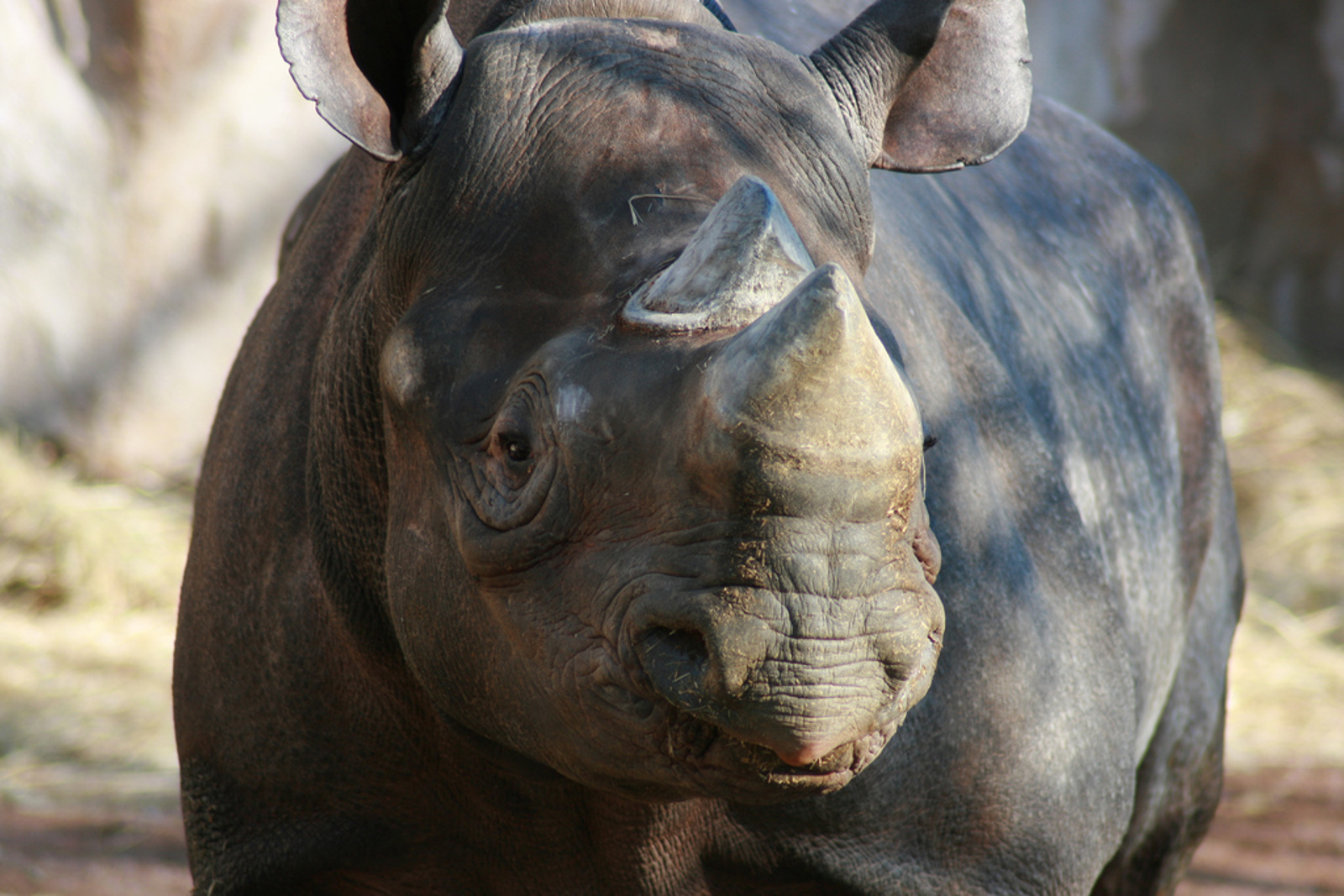 Working Under the Law: How Legal Wildlife Trade Enables Illegal Trafficking