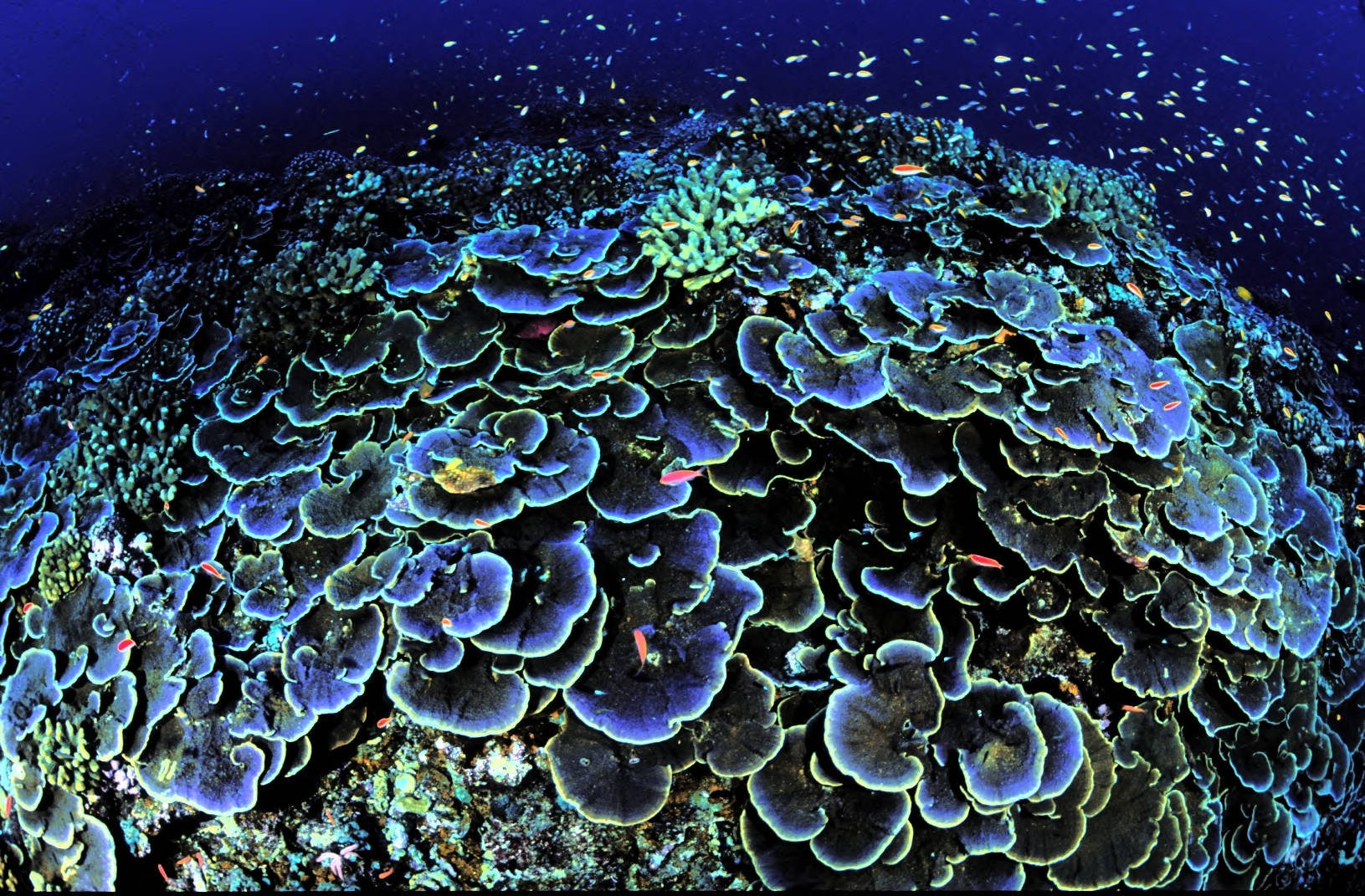 What Do Coral Reefs Have To Do With Dairy Cows?