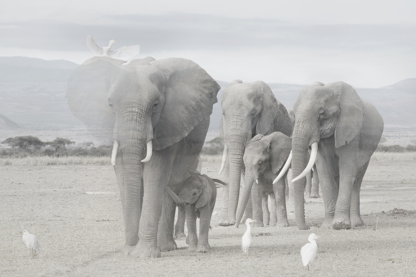 The Day My World Changed When I Met an Elephant