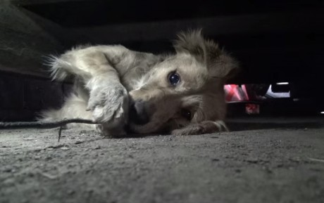 Terrified, Homeless Dog Panics During Her Rescue, But See How She Reacts When She's Finally Safe! (VIDEO)