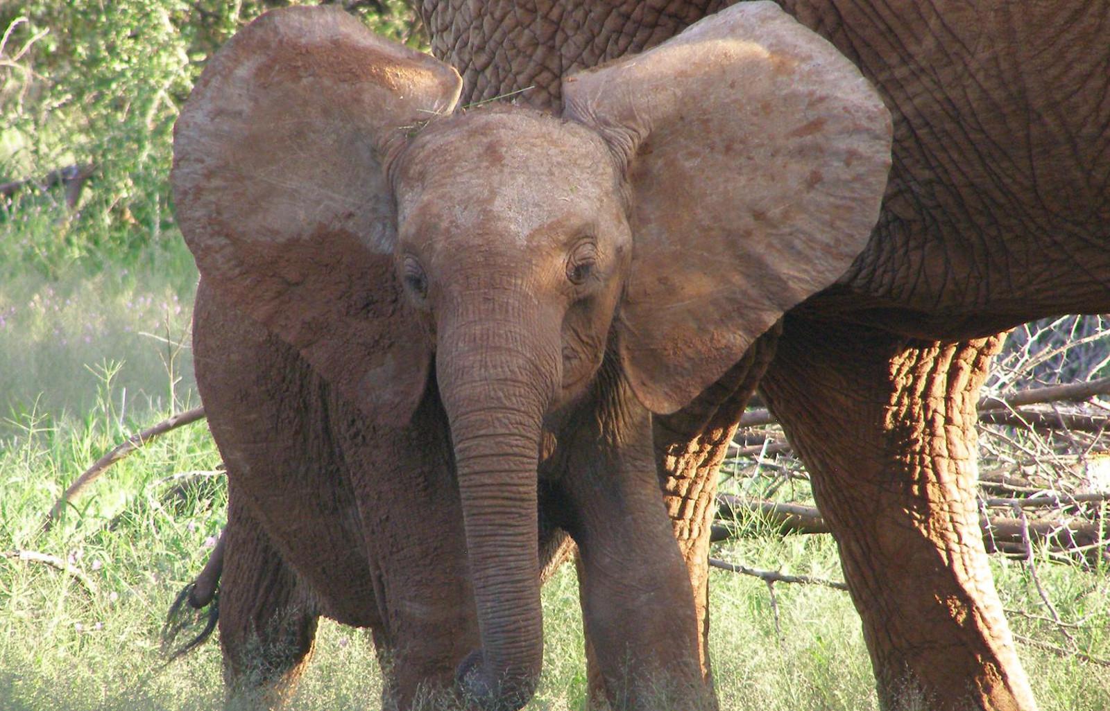 Captured Baby Elephants From Zimbabwe Sent to China to be Put in Captivity