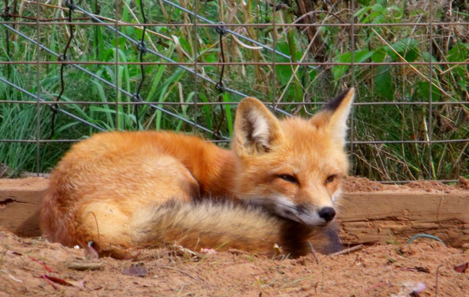 4 Tips for Helping Injured Wildlife