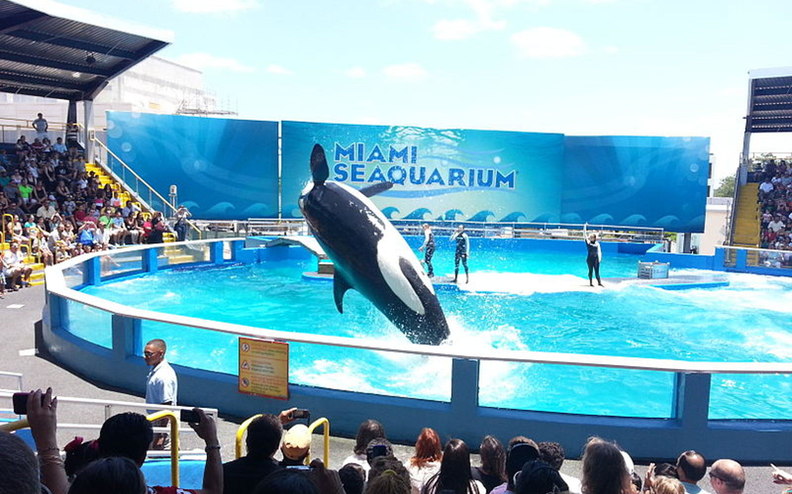 Lolita Might Have to Stay in Miami Seaquarium, but the Battle for Her Freedom is Hardly Over