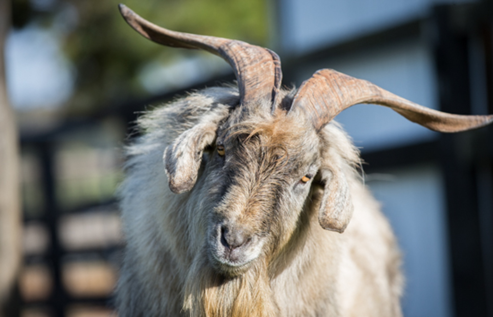What Gandalf the Ram Can Teach Us About Setting Aside Stereotypes in Favor of Compassion