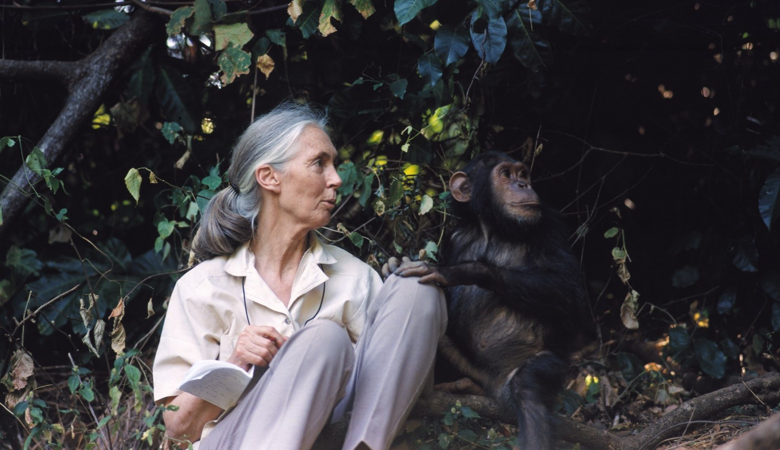 Why the World Needs to Listen to Jane Goodall