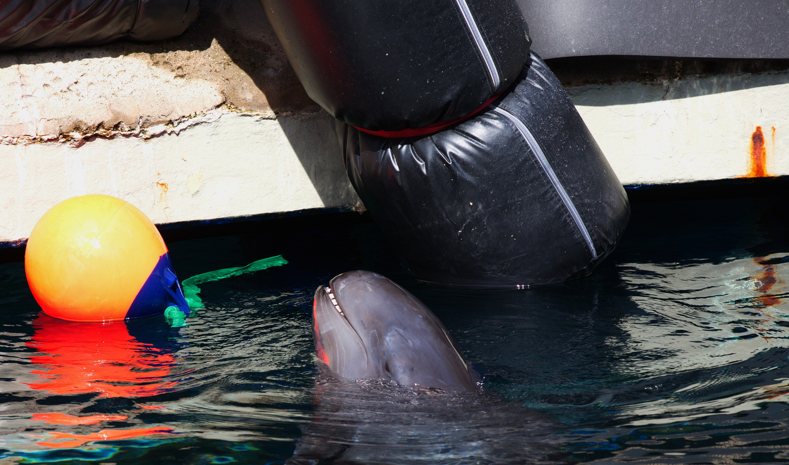 Why Was Release Never Considered for Rescued Whale at Vancouver Aquarium Rehabilitation Centre?