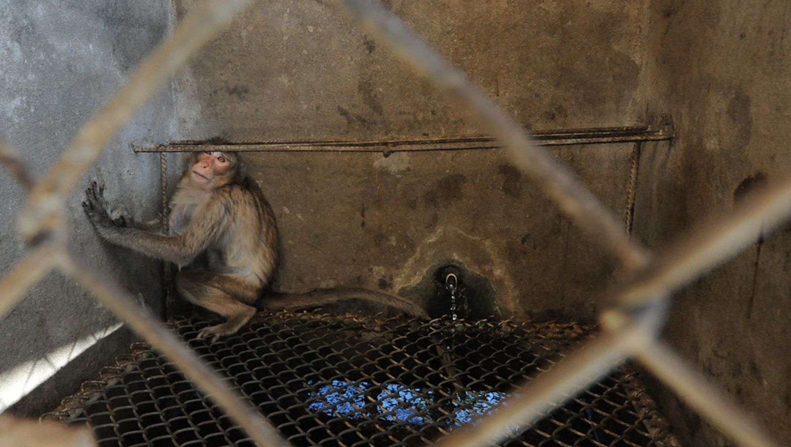 Animal Testing Facilities are Dangerous for Animals and Humans