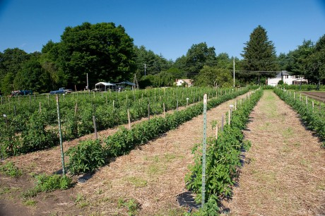 8 Great Plant Combinations to Keep Your Veggie Patch Healthy and Thriving, Naturally!8 Great Plant Combinations to Keep Your Veggie Patch Healthy and Thriving, Naturally!