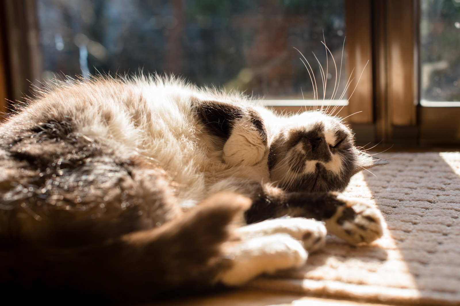 Relaxing Lessons from Your Cat