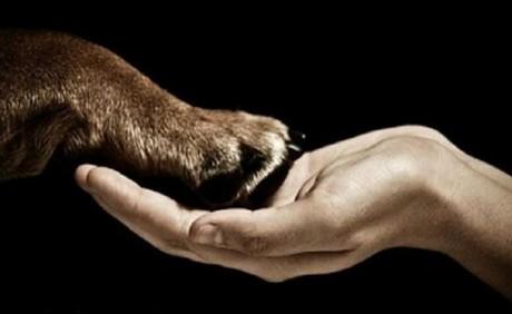 6 Amazing Times Wild Animals Saved Humans