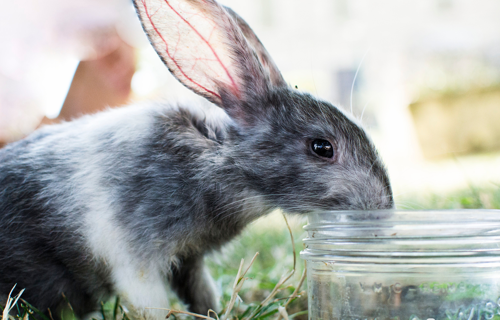 The Shocking Ways Your Cosmetics Might Be Harming Animals and How to Choose Better