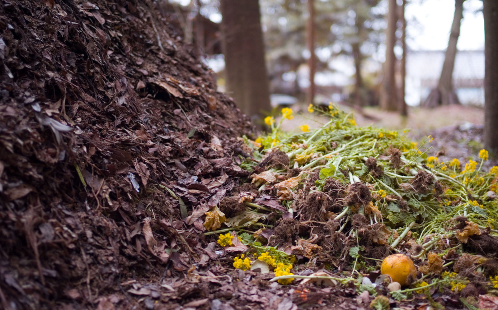 7 Things to Do With Compost if You Don't Garden