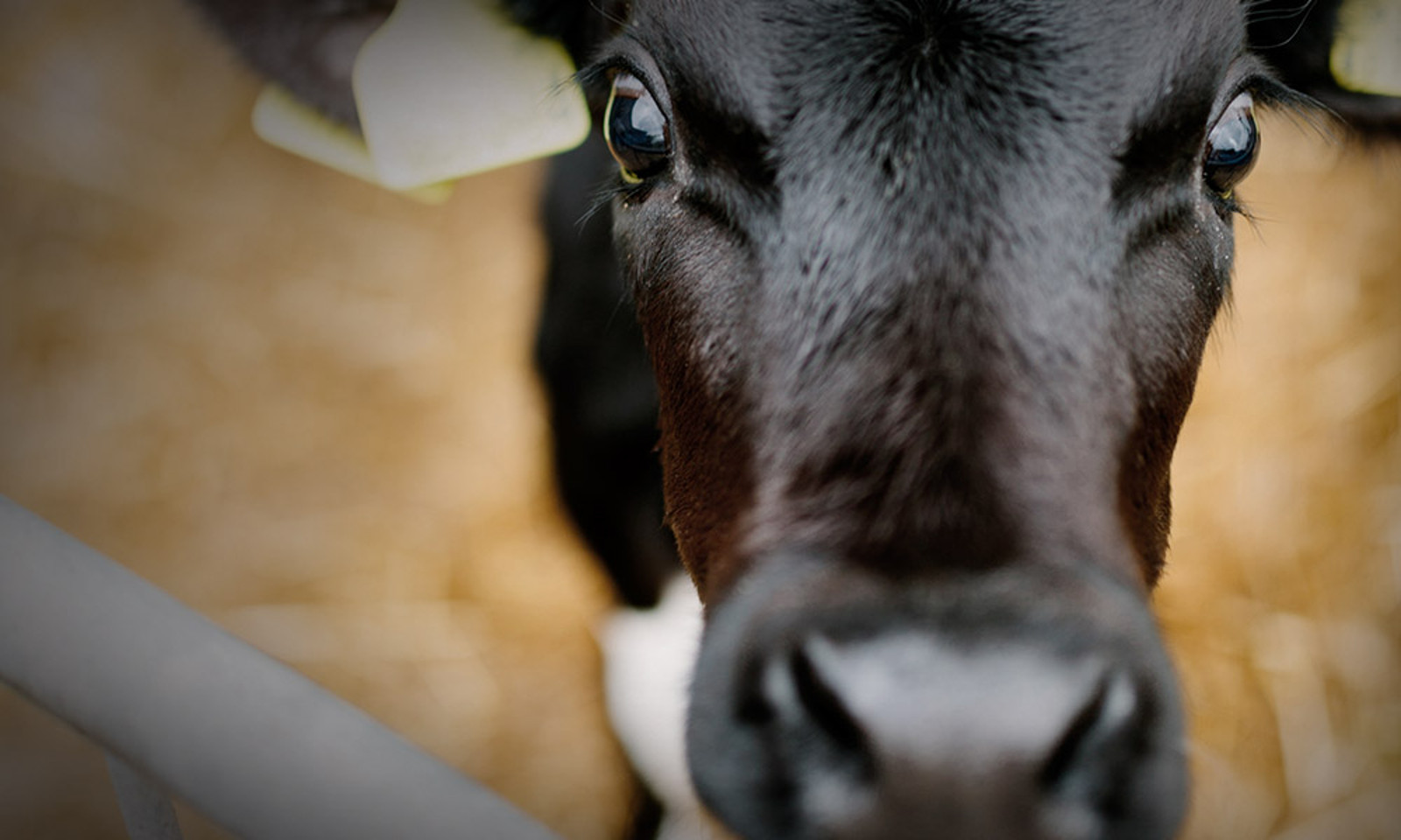 6 Things You Didn't Know About Dairy