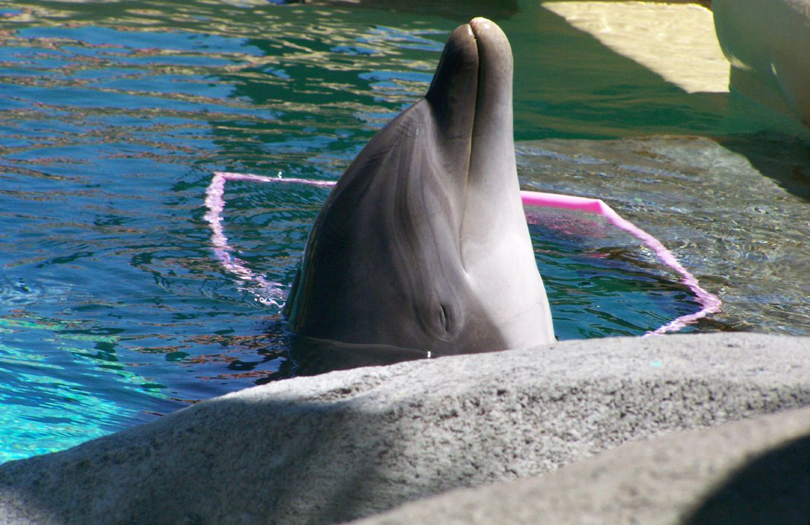 As Taiji's Cove Season Begins, Dolphin Trainers Get Flack for Their Role in This Cruel 'Tradition'