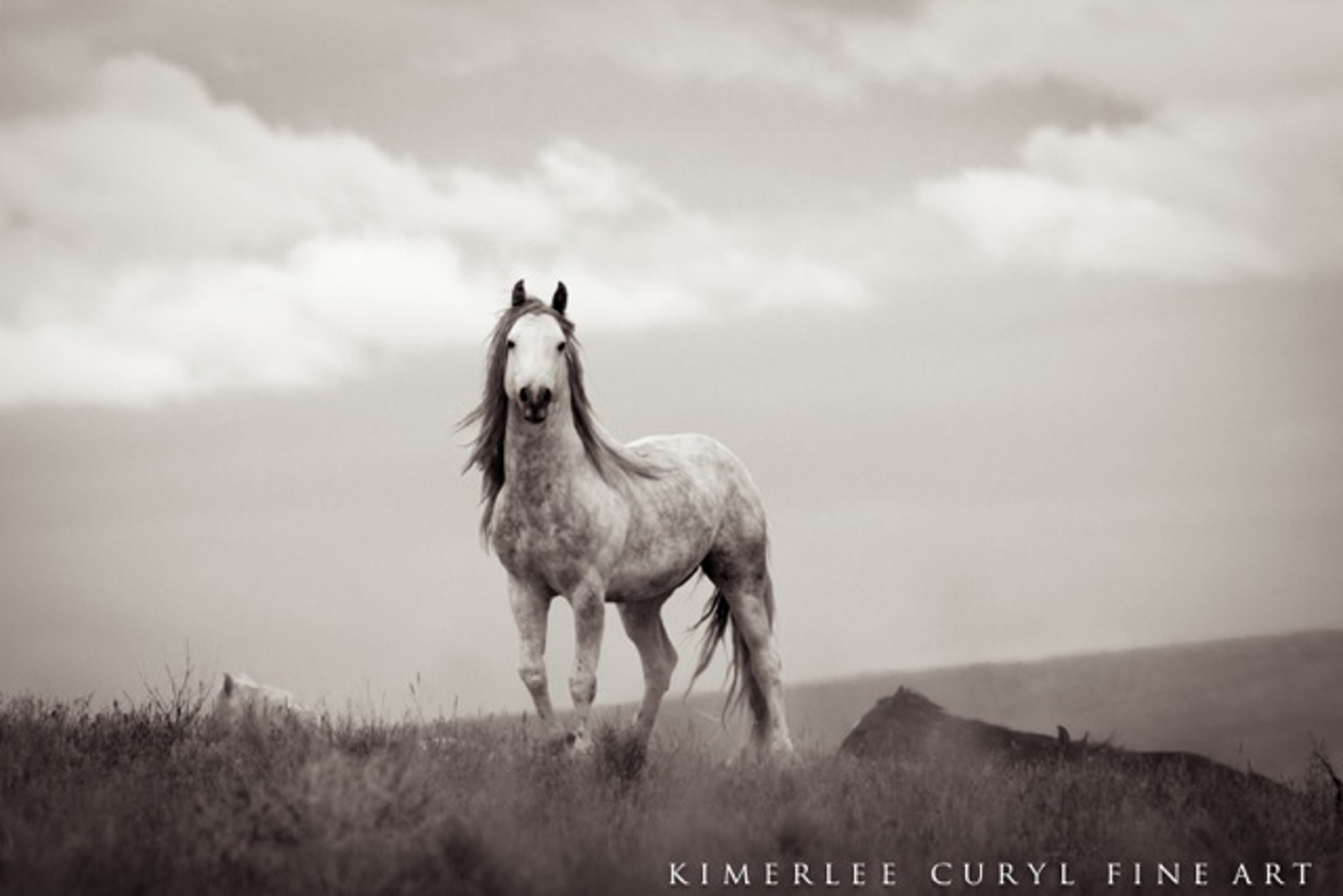 Urgent Action Needed to Stop U.S. Government From Sterilizing Wild Horses in Idaho
