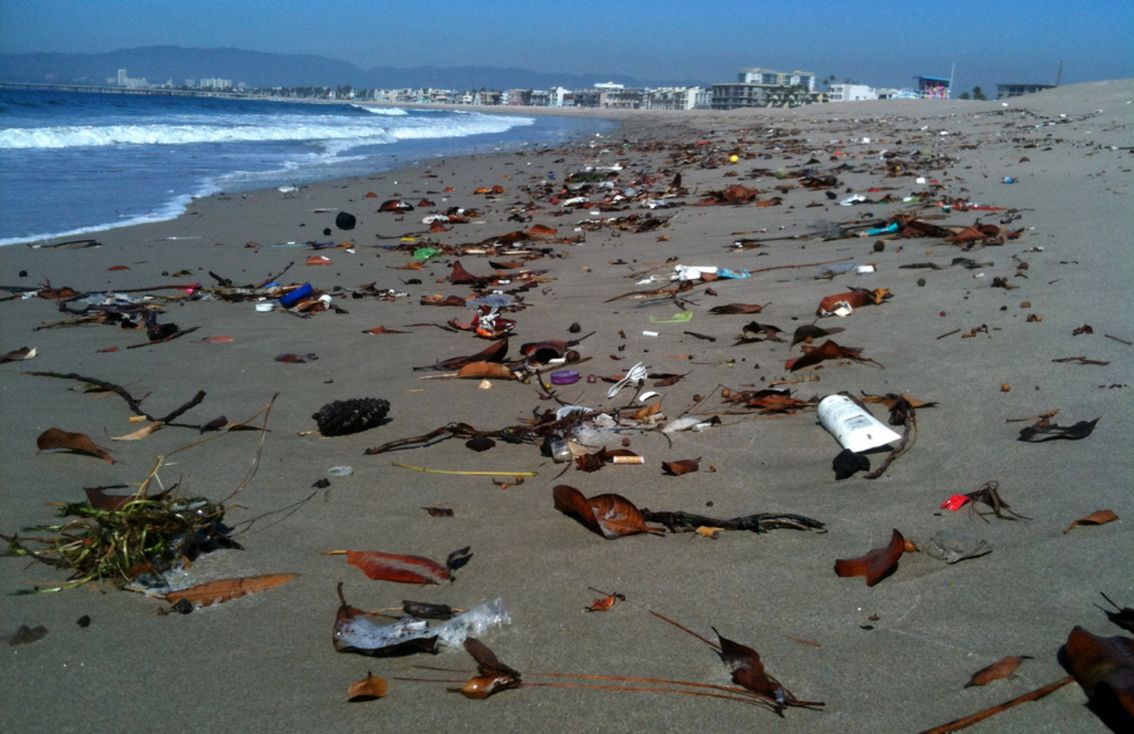 Plastic Bags Versus Microbeads: What is the Biggest Threat to Marine Animals?