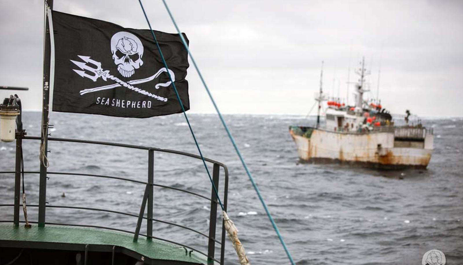 Why We Refuse to Give Up Tracking Illegal Fishing Boats to Save Endangered Marine Species