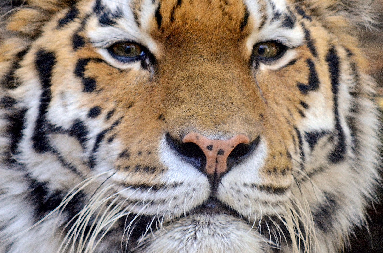 Suffering for the Sake of the Shot: How Using Wild Animals for Film and Photos Hurts Wildlife