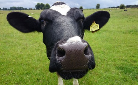 Hamburgers and Hunger: How Animal Agriculture Endangers the Future of Food In America