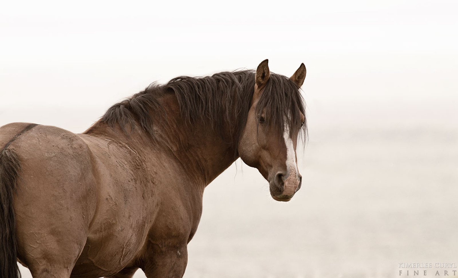 Wild Horses in Oregon Threatened By Livestock Industry. How You Can Help Now!