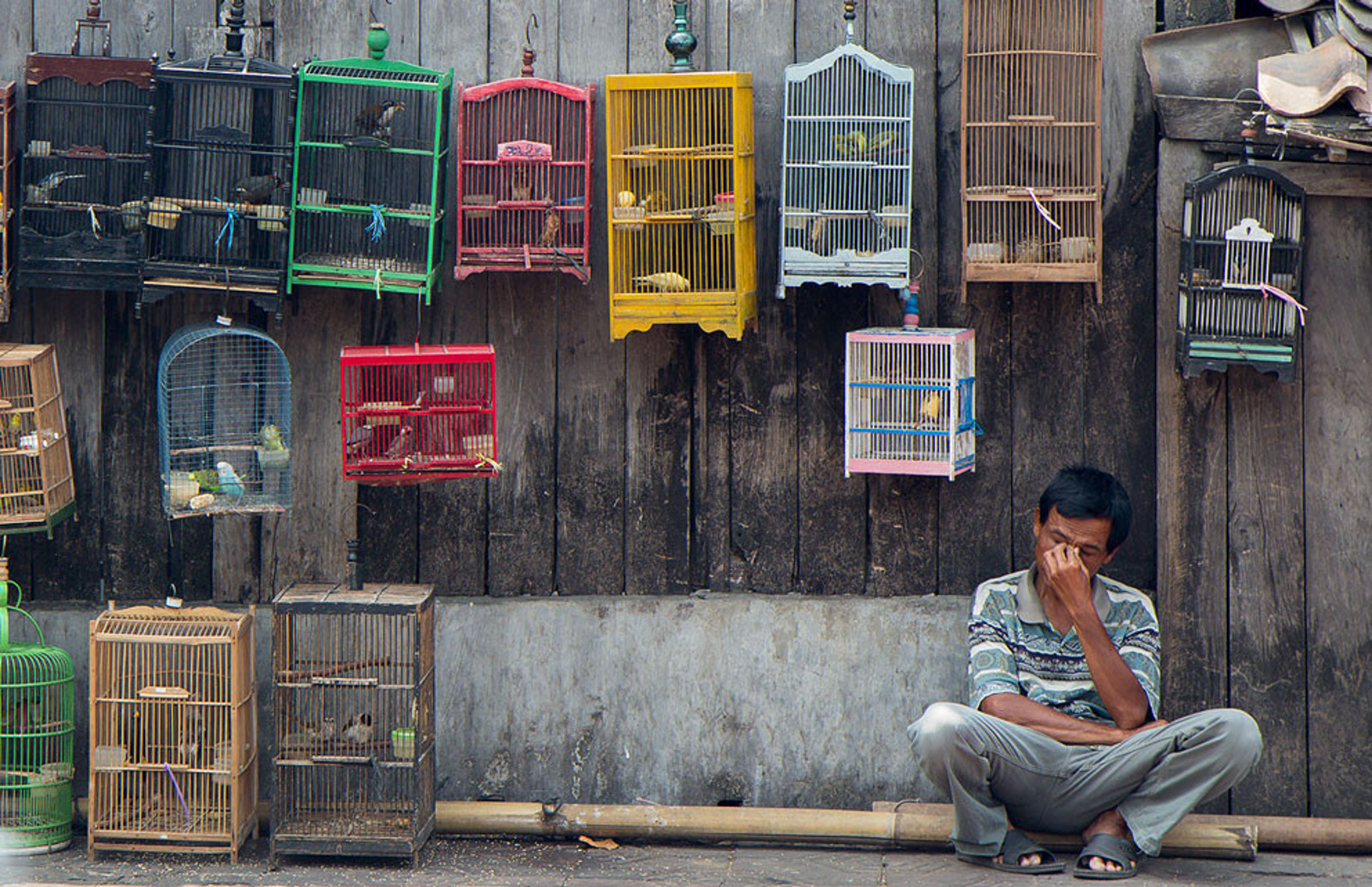 How the Illegal Pet Trade is Devastating Wild Bird Populations in Indonesia