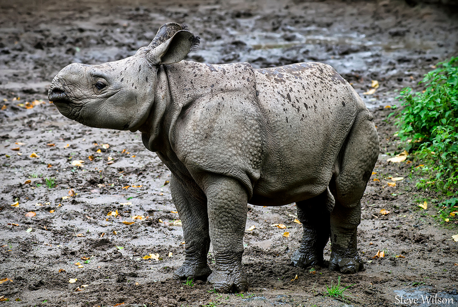 This Children's Movie is Helping to Empower Kids in Vietnam to Stand Up for the World's Rhinos