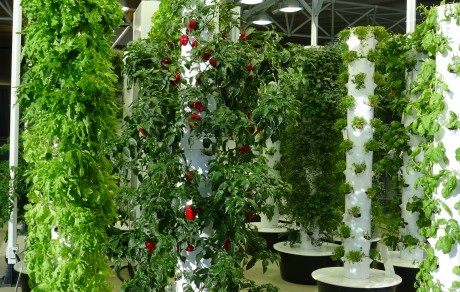 Why Vertical Gardening is Awesome and How to Do It for Next to Nothing
