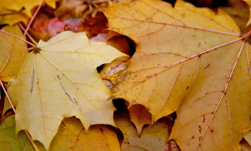 7 Creative Projects for All Those Autumn Leaves