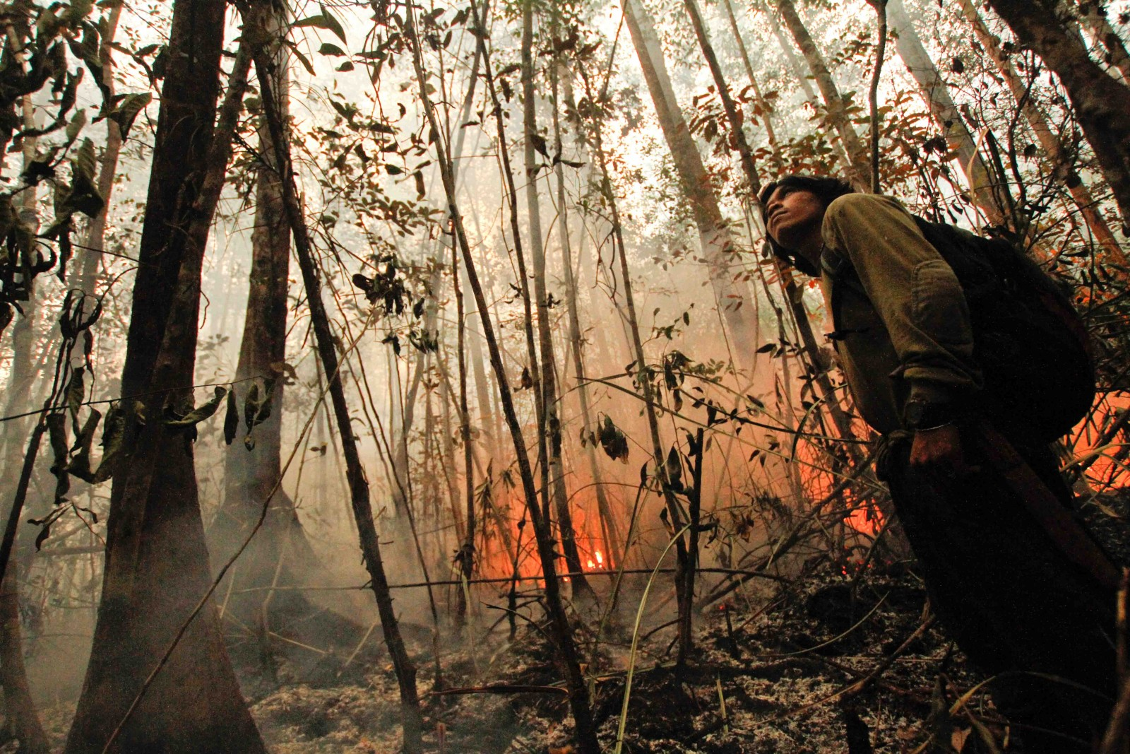 Borneo is Burning and Orangutans Need Your Help