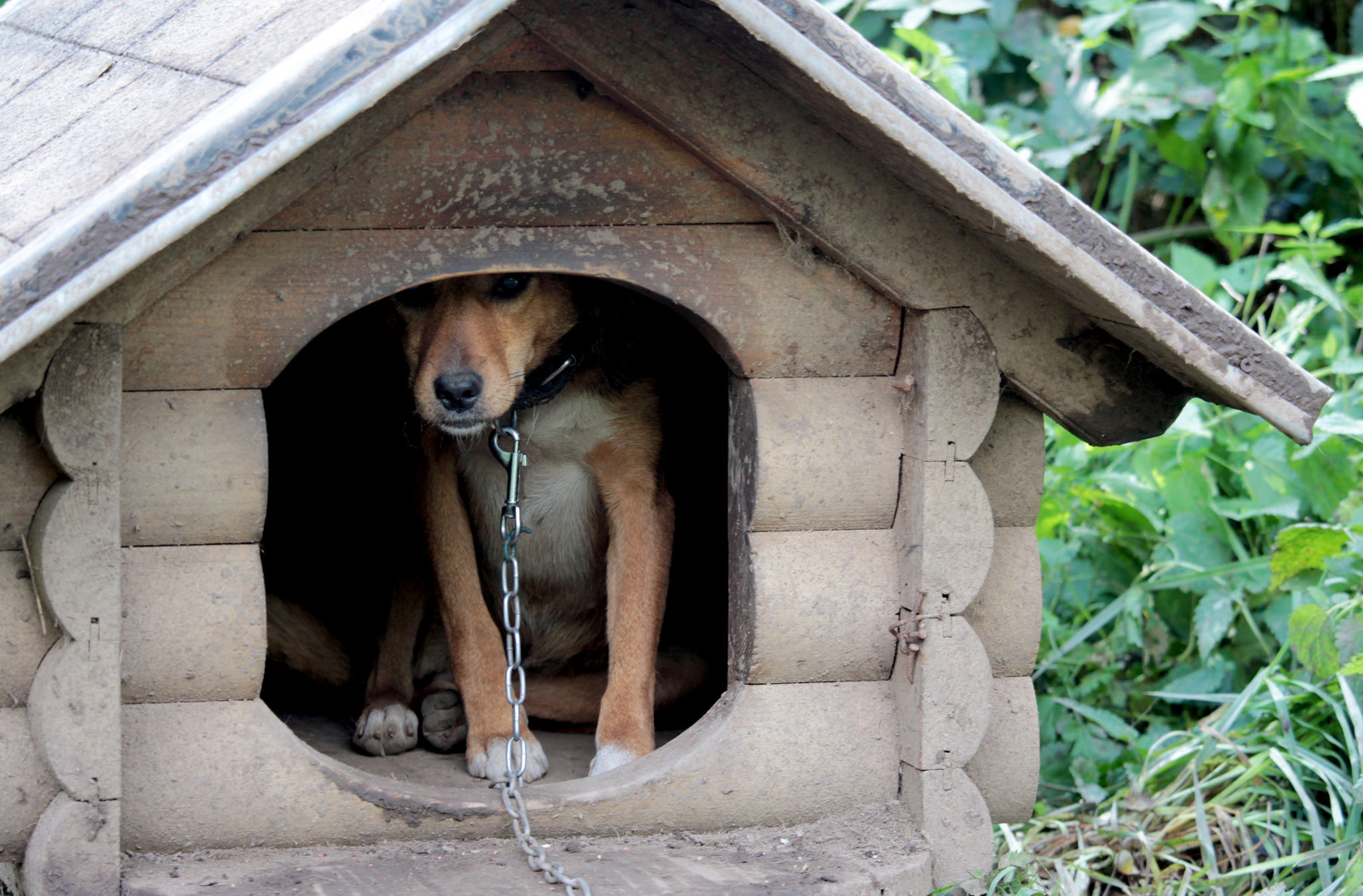 Over 30 Dogs Living in Miserable Defunct Animal Shelter in Bosnia Desperately Need Your Help