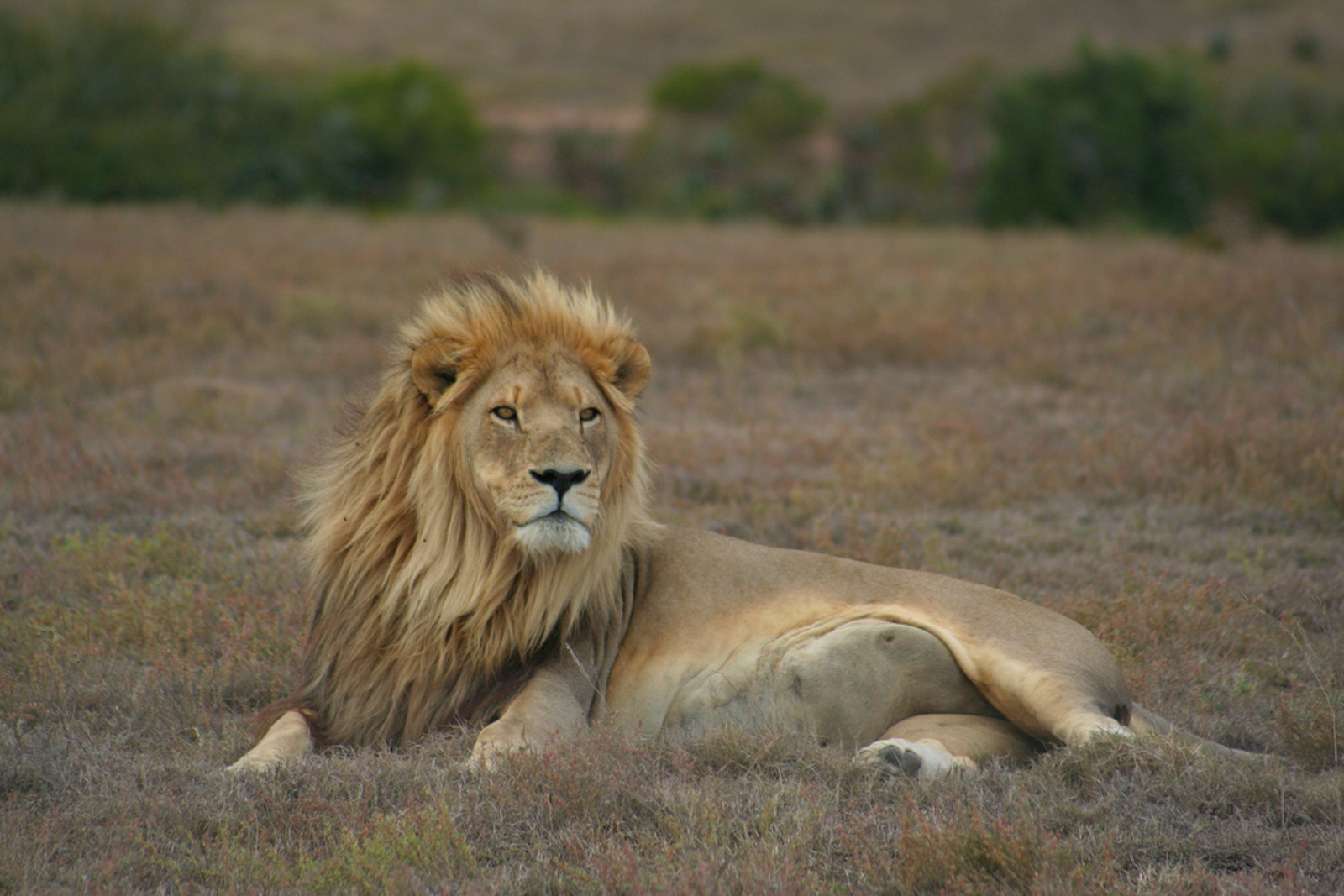 The Other Cecils: The Unnamed Victims of Poaching and Trophy Hunting