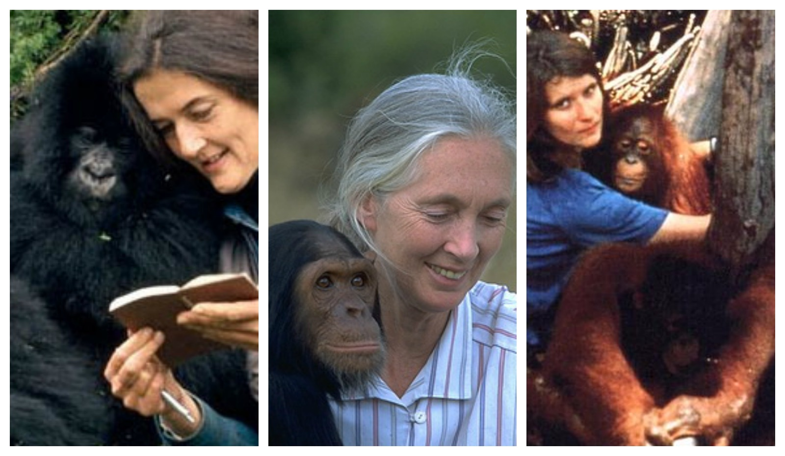 Meet the 3 Inspiring Women Who Changed Our Perception of Primates Forever