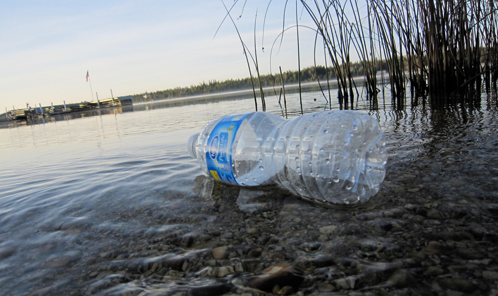 Care About Wildlife? Here's Why You Should Kick the Bottled Water Habit Today