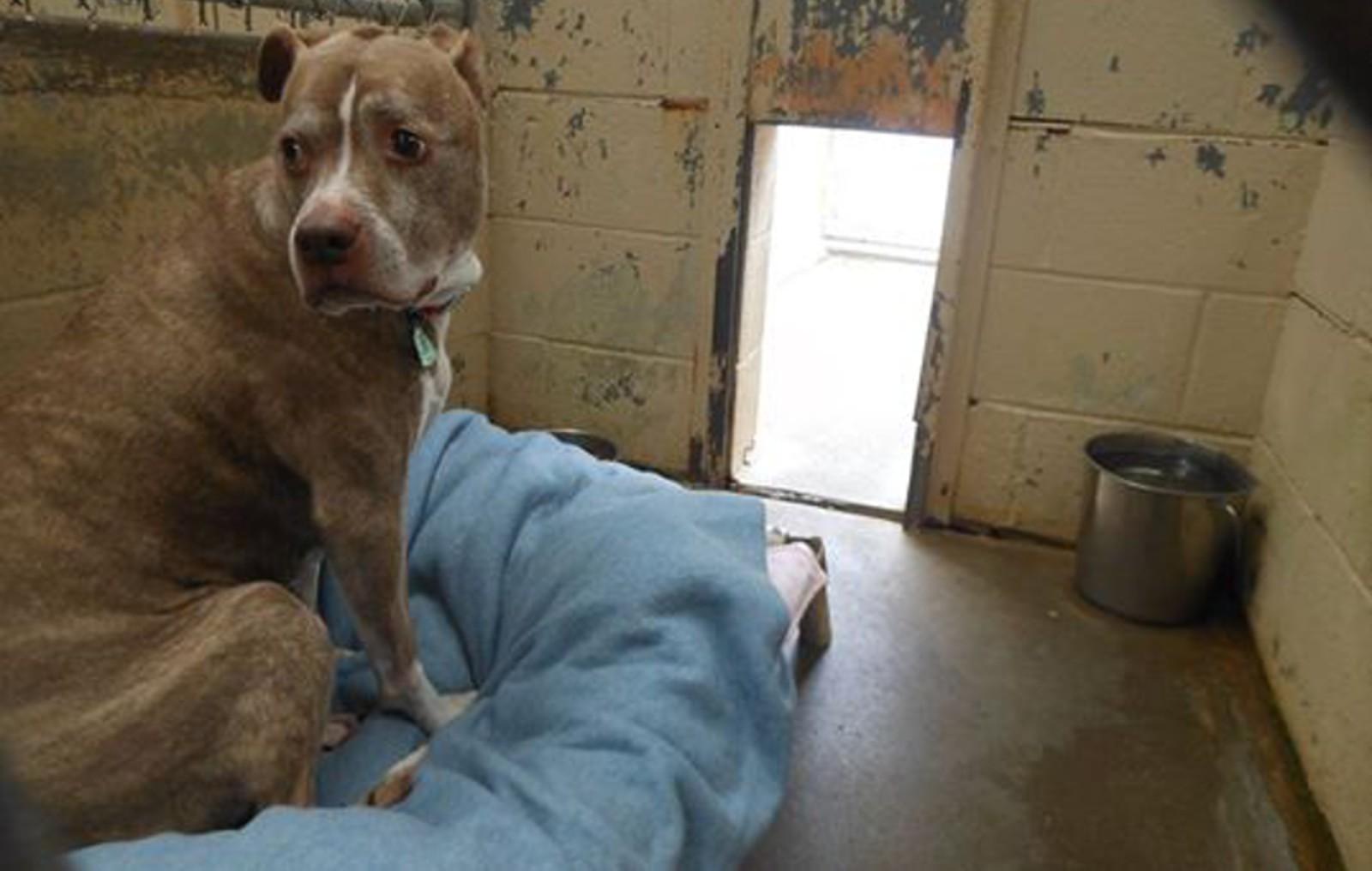 Senior Dog Left Homeless After Her Family Remodeled Their House – Help Her Find the Loving Home She Deserves!
