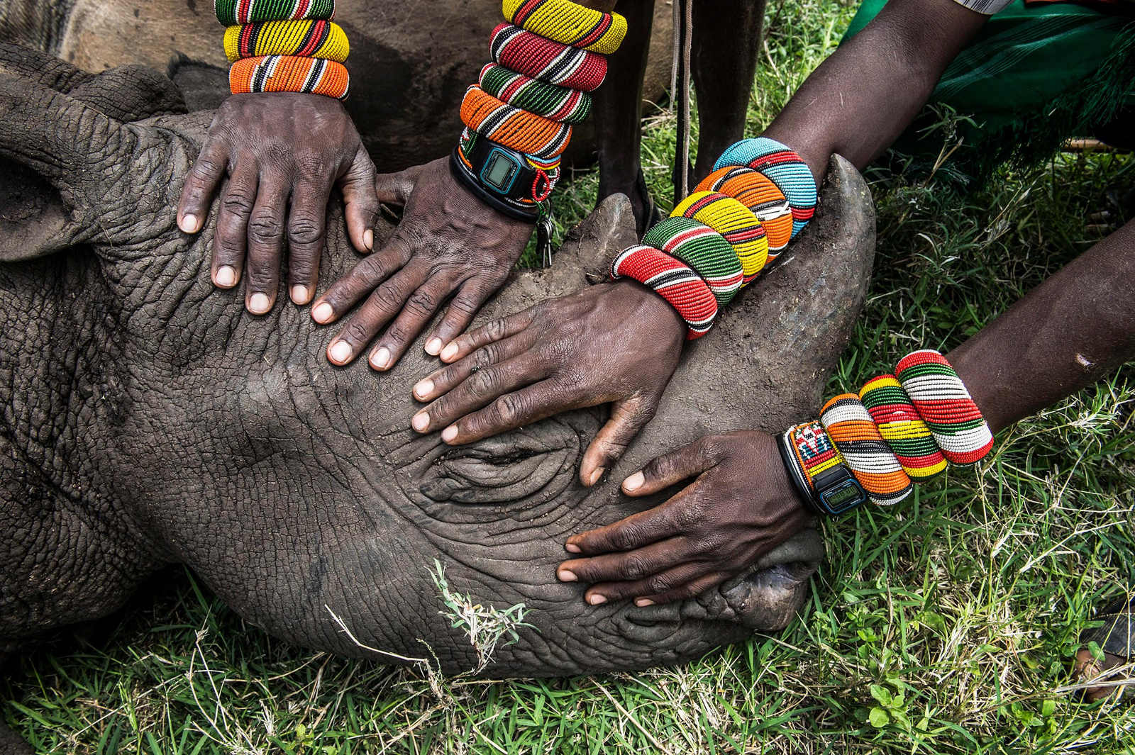 Heartbreaking Photo of Orphaned Rhino Shows Us That the Fate of This Species is in Our Hands