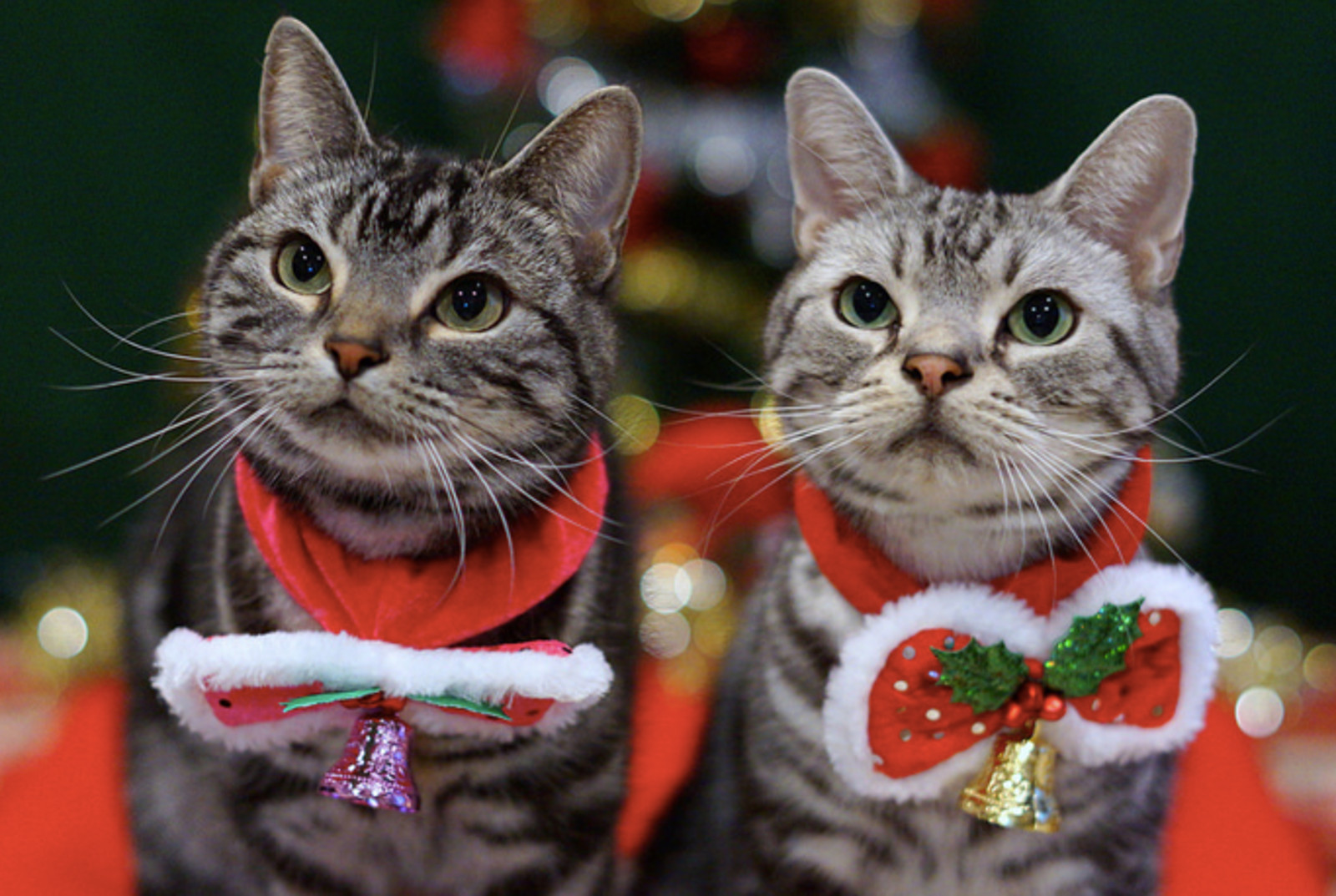 A Guide to Keeping Your Pets Safe This Holiday Season