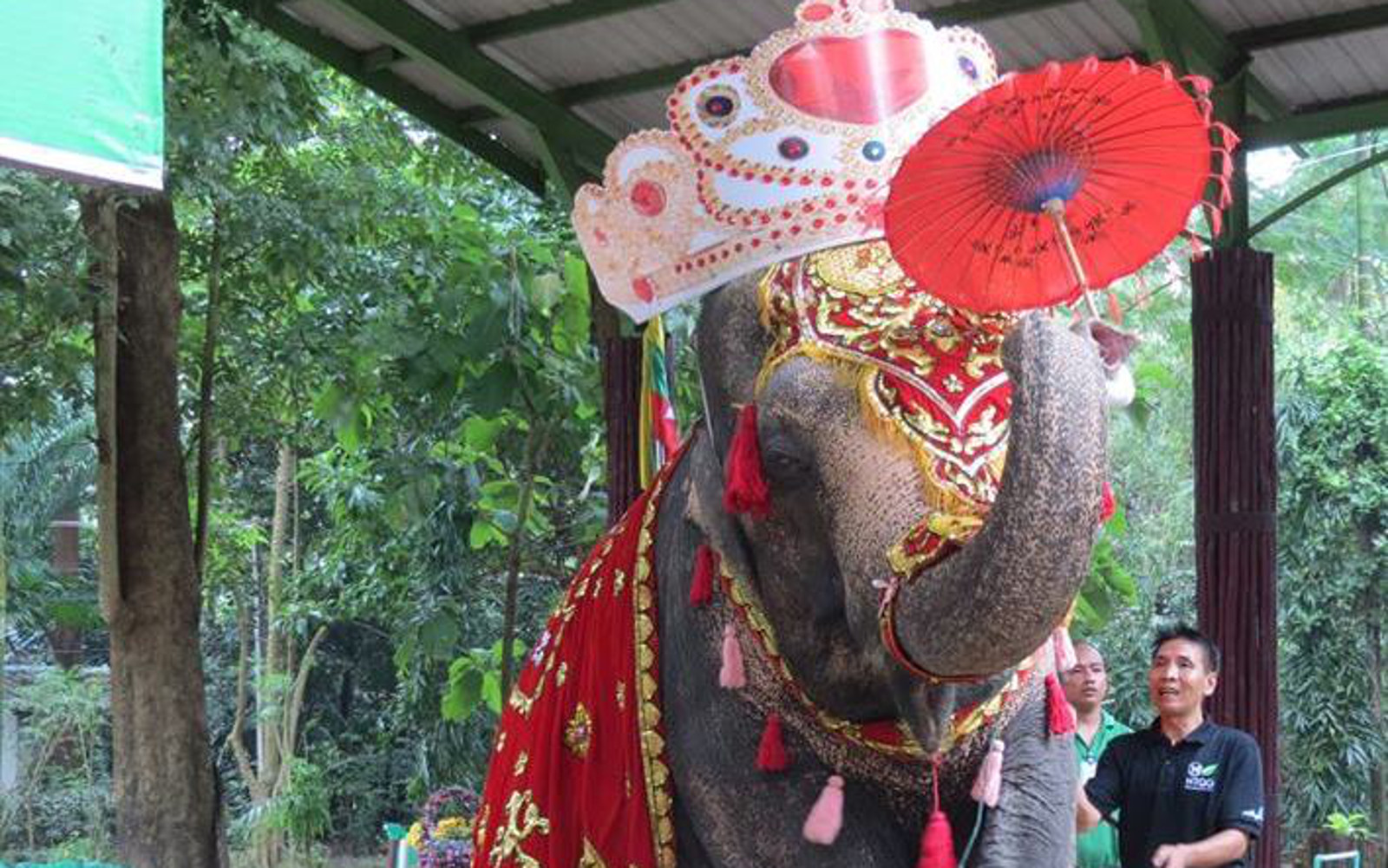 Help Free the Performing Elephant Who's Been in a Zoo For 55 Years