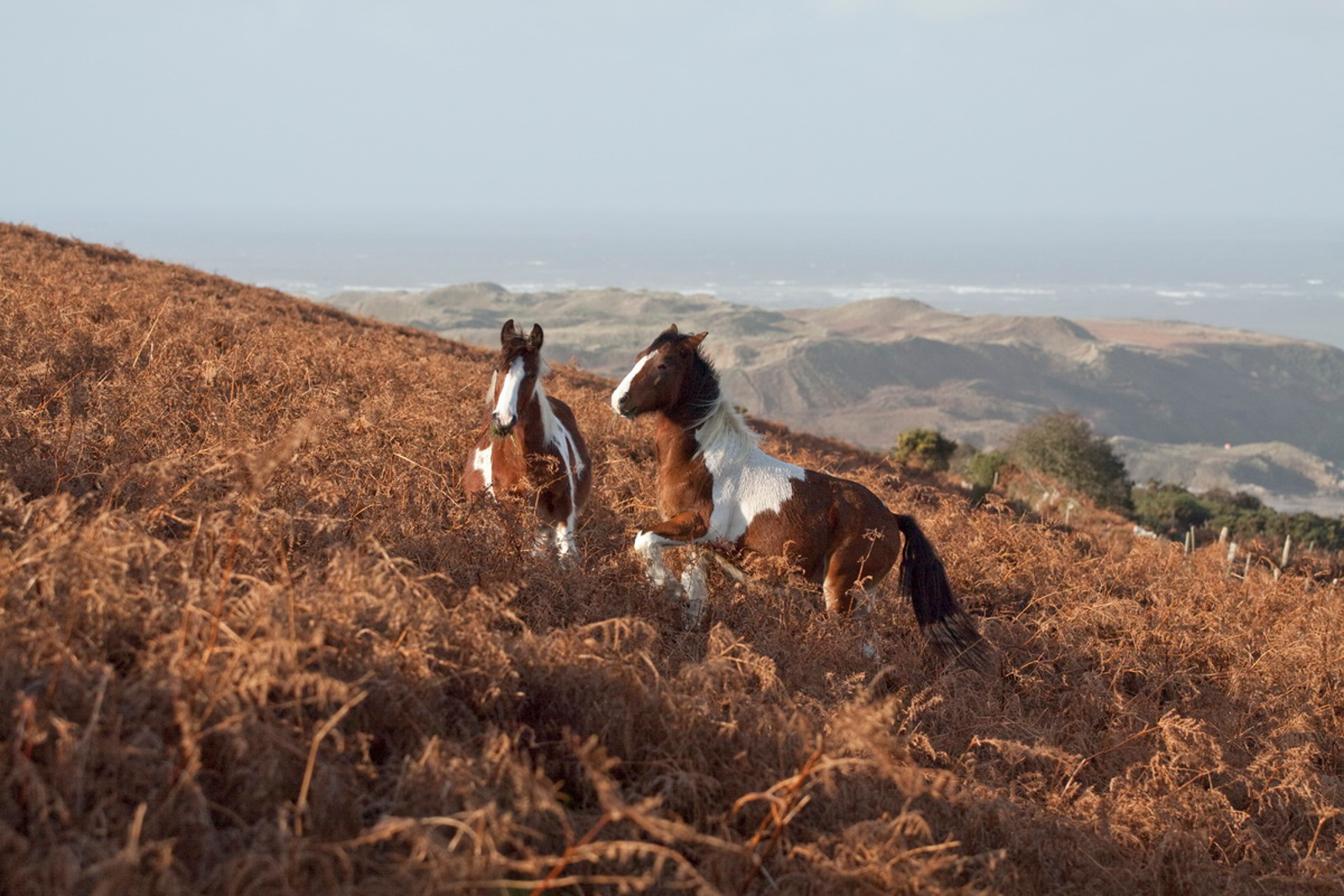 How Your Diet Can Help Save Wild Horses