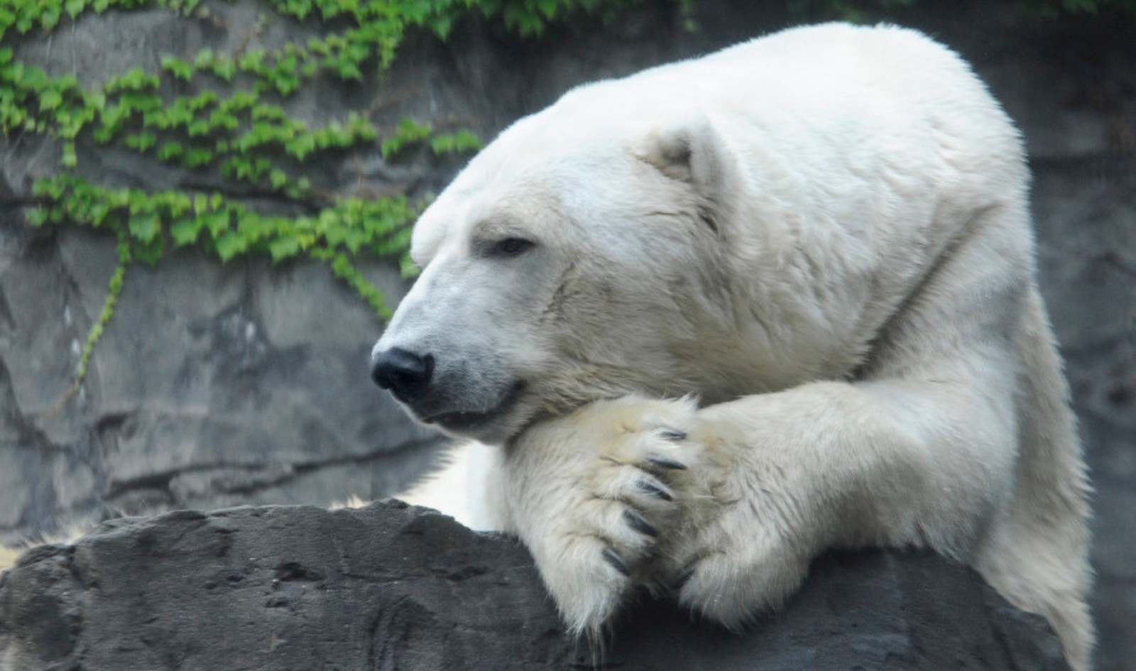 Why Do Polar Bears Need Prozac?